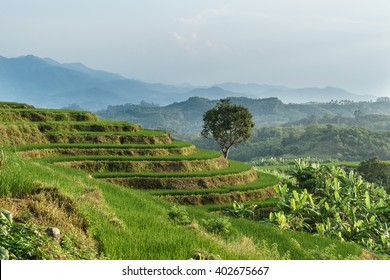 Tropical Landscape with rice paddies terrace in Yahu village, Wuzhishan, Hainan, China