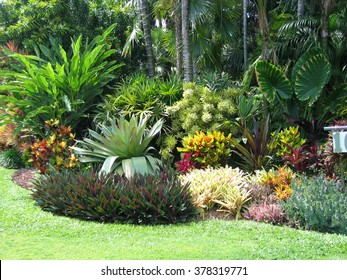 Tropical Landscaping (Foliage, Shrubs, Palms, Grass and Flowers)