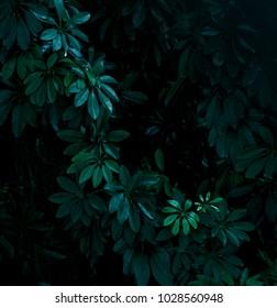 tropical leaf background dark tone style