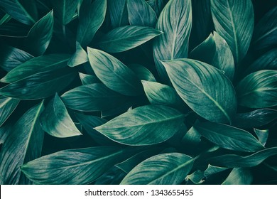 tropical leaf, dark green foliage in rainforest, nature background