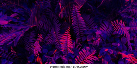 Tropical leaf forest glow in the black light background. High contrast.