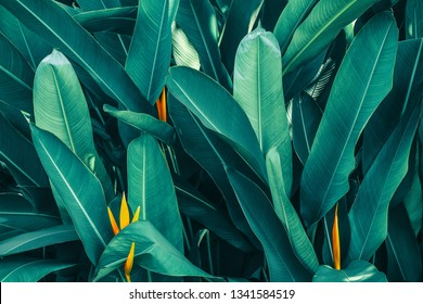 tropical leaf, lush foliage in rainforest, nature background, blue toned process