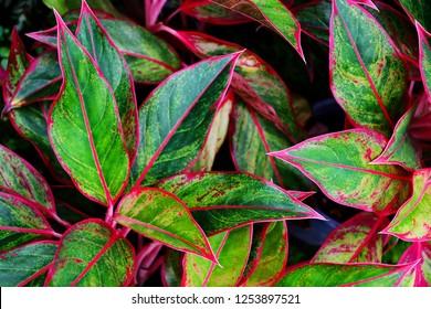 tropical leaf, lush green foliage, ornamental plant, nature background