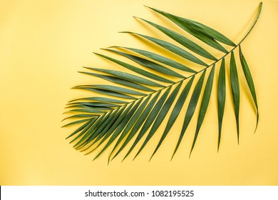 Tropical leaf on yellow background. Flat laying, top view