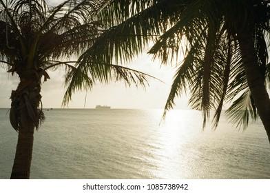 tropical leaf and sea