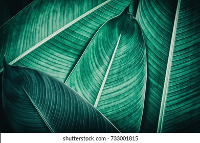 tropical leaf texture, dark green foliage nature background