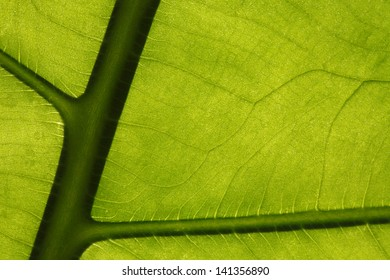 Tropical leaf texture, full frame