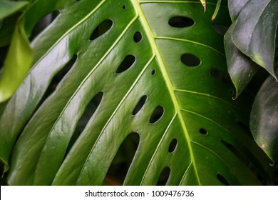 Tropical leave nature