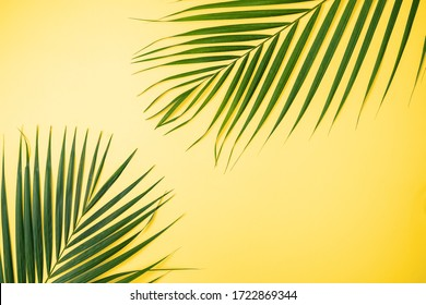 Tropical Palm Leaves On Yellow Background Images Stock Photos Vectors Shutterstock Share yellow background with your friends. shutterstock