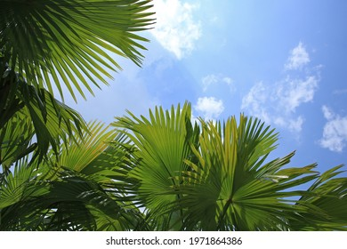 Tropical leaves background with sky