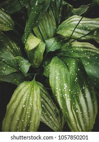 Tropical leaves close-up, Greenhouse, Atmospheric background, Selective focus