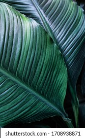 tropical leaves, dark green foliage, abstract nature background