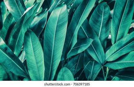tropical leaves, dark green foliage nature background