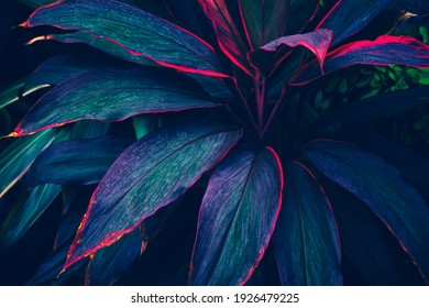 tropical leaves, dark green and purple foliage, botanical nature background - Shutterstock ID 1926479225