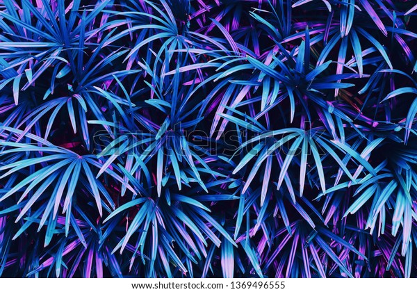 tropical leaves, exotic palm foliage, abstract natural pattern, colorful nature background, blue and purple toned process.