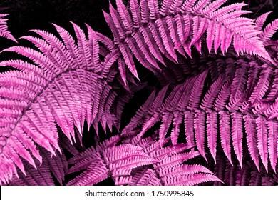 tropischer Laubfarn auf gesättigtem, hellrosa Hintergrund