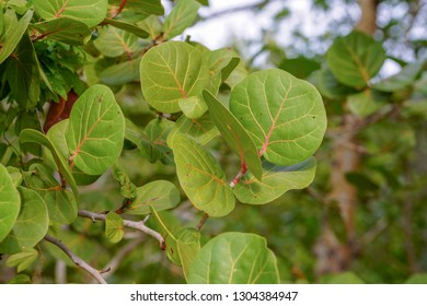 Tropical leaves of Florida