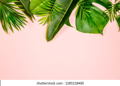 Tropical leaves and flowers on pink background