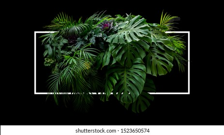 Tropical leaves foliage jungle plant bush foral arrangement nature backdrop with white frame on black background.