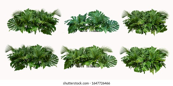 Tropical leaves foliage plant bush floral arrangement nature backdrop isolated on white background,