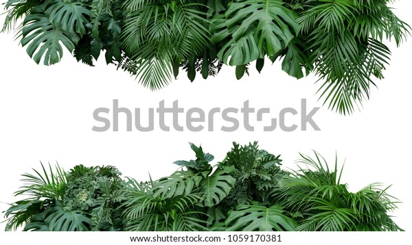 Tropische Blätter Blattpflanze, Blumengestein, Naturhintergrund einzeln auf weißem Hintergrund, Beschneidungspfad inbegriffen.