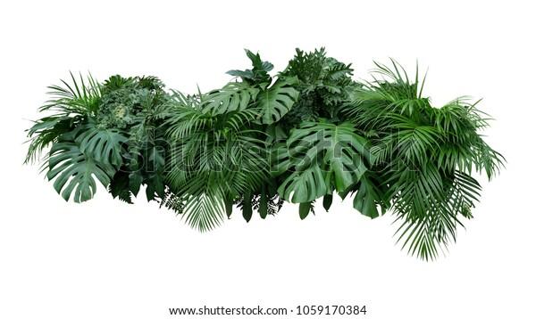 Тропические листья листьев растений куст цветочный композиция природы фон изолированы на белом фоне, обрезка пути включены.