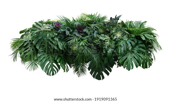 Tropical leaves foliage plant jungle bush floral arrangement nature backdrop with Monstera and tropic plants palm leaves isolated on white background, clipping path included.