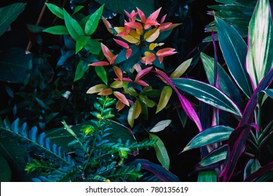 Tropical  leaves in the garden , Green leaves of tropical forest plant for nature pattern and background, People grow plants with thick bushes to make fences.