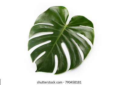 Tropical Leaves. Green fresh split leaf philodendron. Isolated on white background. Top view flat lay.