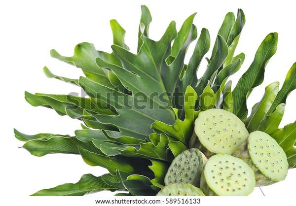Tropical Leaves Lotus Seeds Arrangement Stock Photo (Edit Now) 589516133