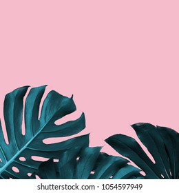 Tropical Leaves of monstera on a pink duotone background