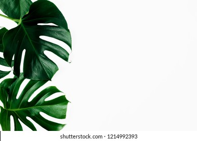 Tropical leaves Monstera on white background with copy space top view flat lay