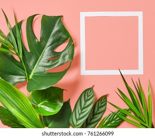 Tropical leaves of monstera plant and white frame for text on a pink background