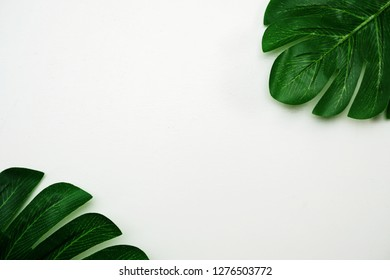 tropical leaves monstera and space copy on white background