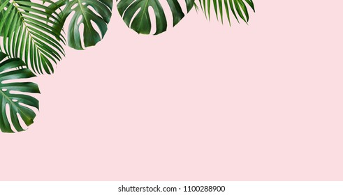 Tropical leaves monstera and yellow palm on pink background with copy space