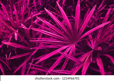 tropical leaves, nature background, purple toned