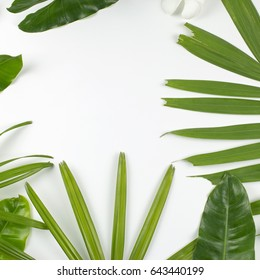 Tropical leaves on white background with copy space. Top view. flat lay.