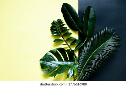 Tropical leaves on a yellow black background monstera, ficus, palm, zamiokulkas .On a yellow or black background. Top view.