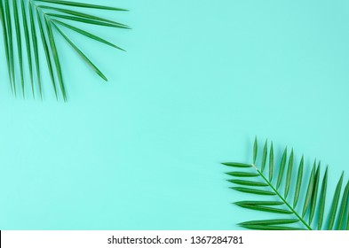 Tropical leaves palm tree on a blue background with space for text. Top view banner for travel agency