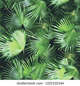Tropical leaves pattern palm plants. Green leaf monstera seamless. Artistic photo collage for floral print. With soft focus effect
