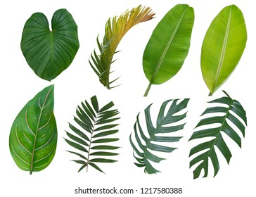 Tropical leaves set, Plant isolated on white background. Clipping path