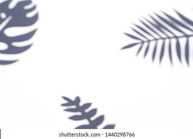 Tropical leaves shadows on the white paper background on the noon sun. Summer concept frame. Copy space