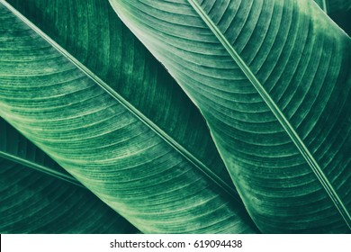 tropical leaves texture background