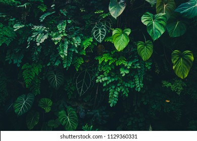 Greenery Wallpapers Images Stock Photos Vectors