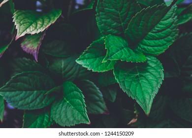 팽창 Stock Photos Images Photography Shutterstock