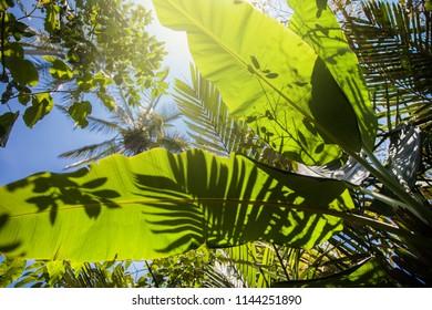 Tropical lush green foliage