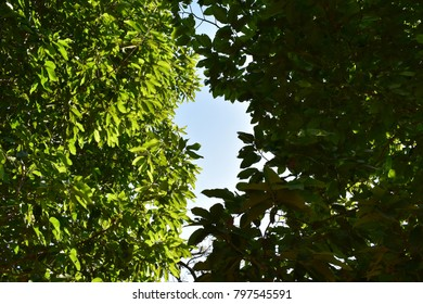 tropical lushly green trees in bright sunshine