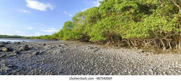 Tropical mangrove beach, Nicoya Gulf, Costa Rica