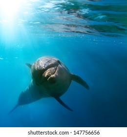 tropical marine life with wild dolphin swimming underwater close the sea surface between sunrays