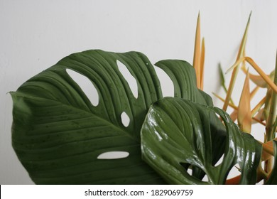 Tropical modern leaf monstera for new year's christmas 2021 unedited.